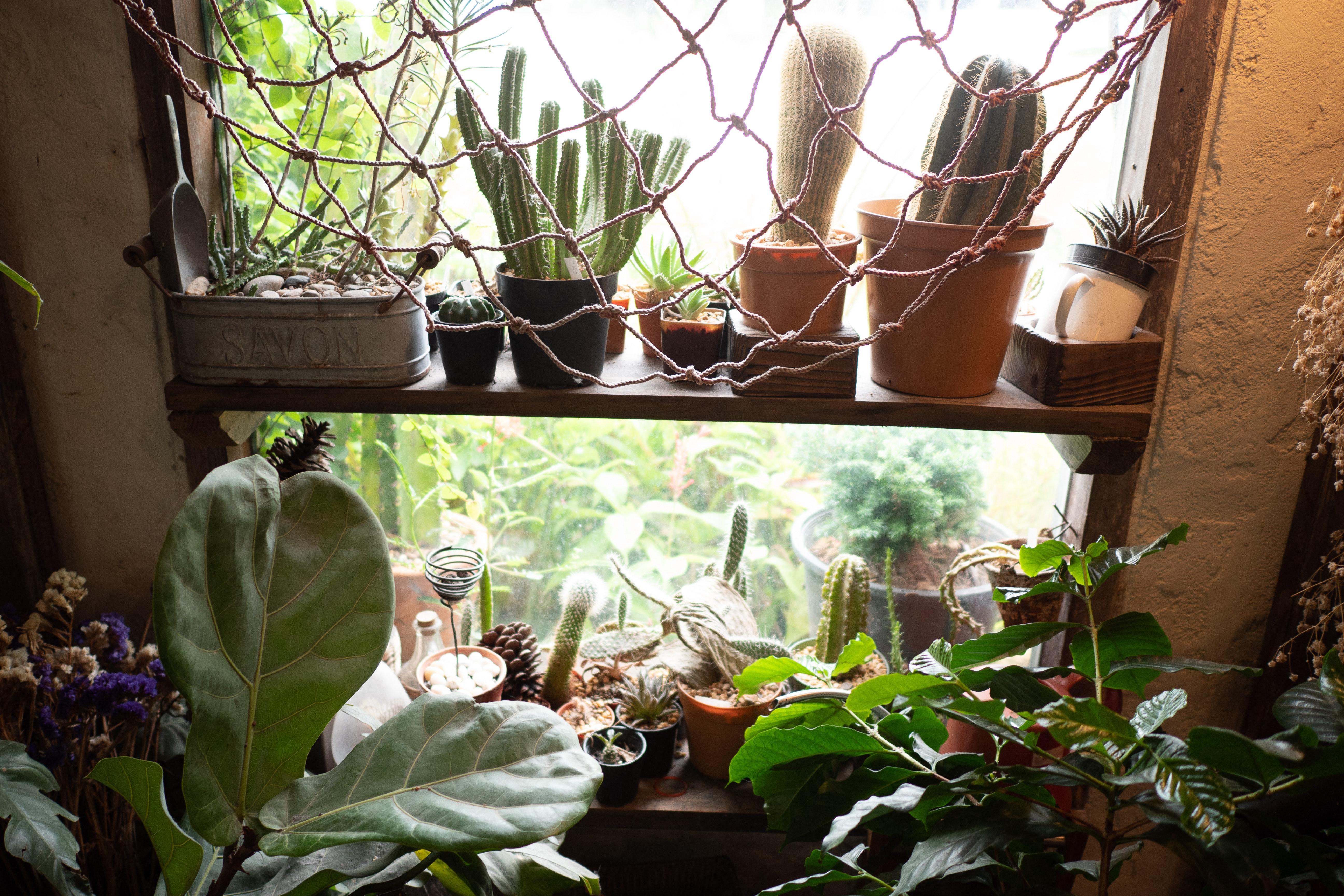 Planten: leuk, maar ook functioneel!